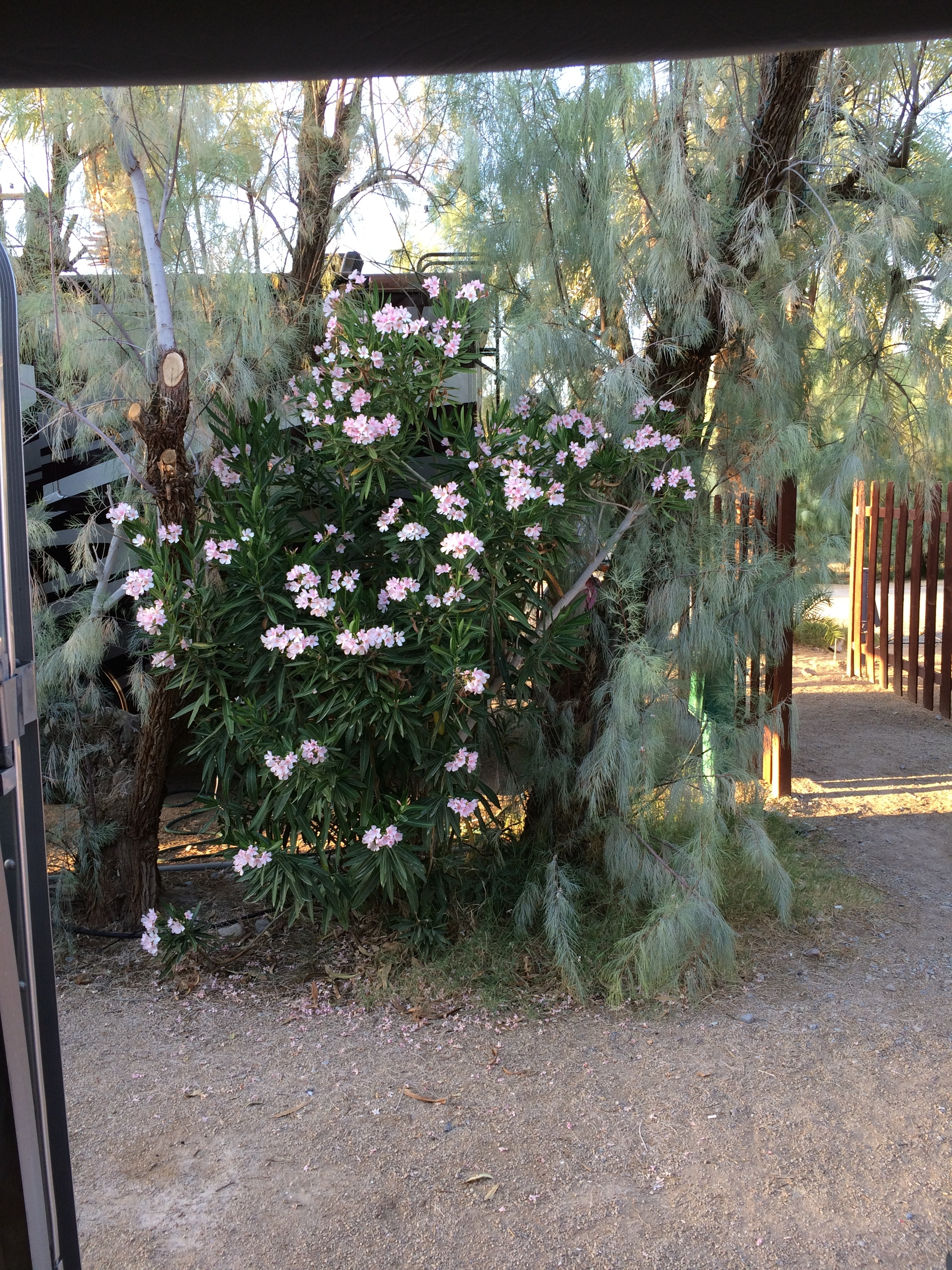 The view out my door at Furnace Creek Resort RV Park.