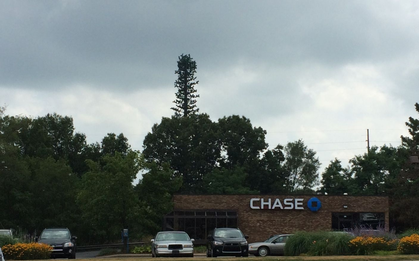 What cell phone tower? Nobody here but us trees.