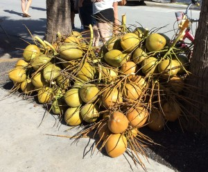 Coconuts Ready for Sale