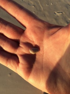 shell in my hand