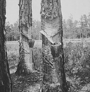 PR_turpentine_trees2_1937_edited