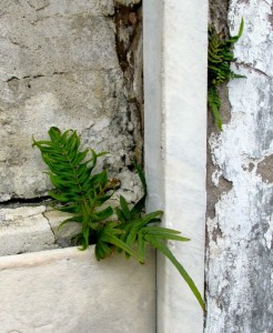 fern in tomb