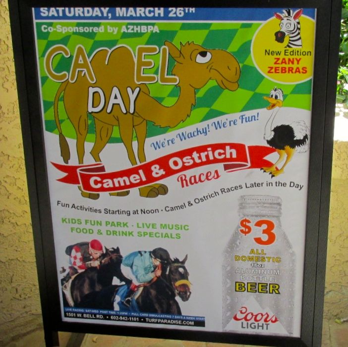 Camel day sign
