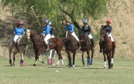 Polo Ponies 1