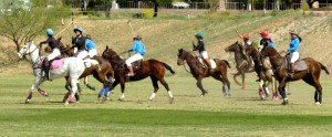 Polo ponies 2