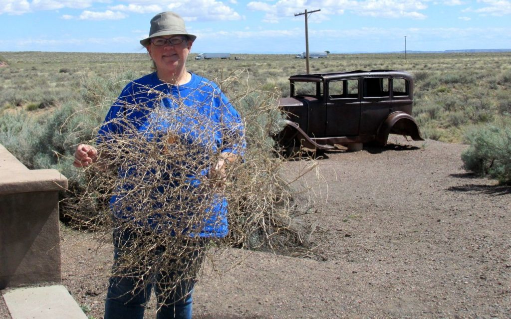 I found a tumble weed on Route 66