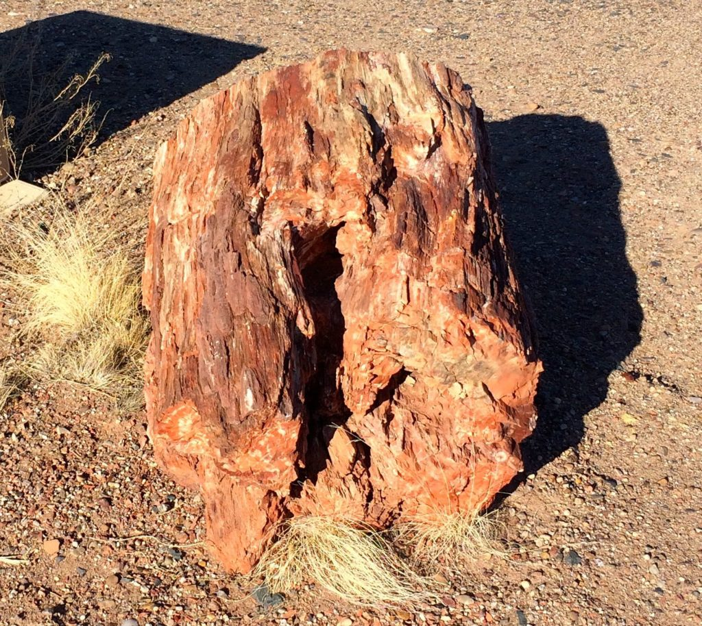 Petrified wood at the campsite