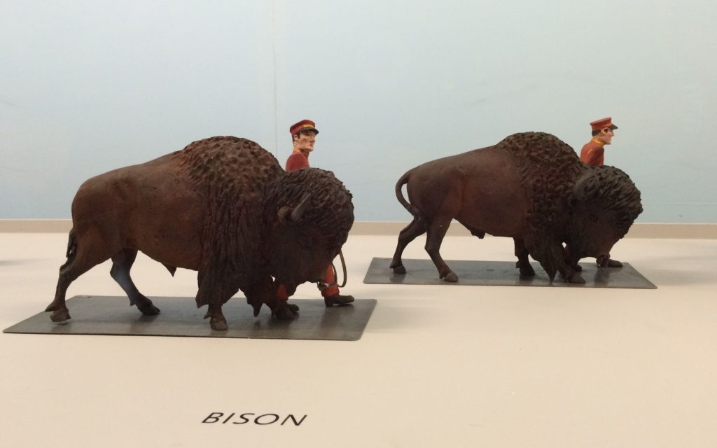 Buffalo - not bison