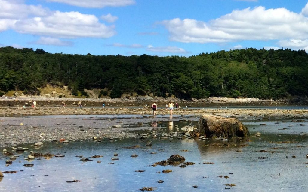 exploring-at-low-tide