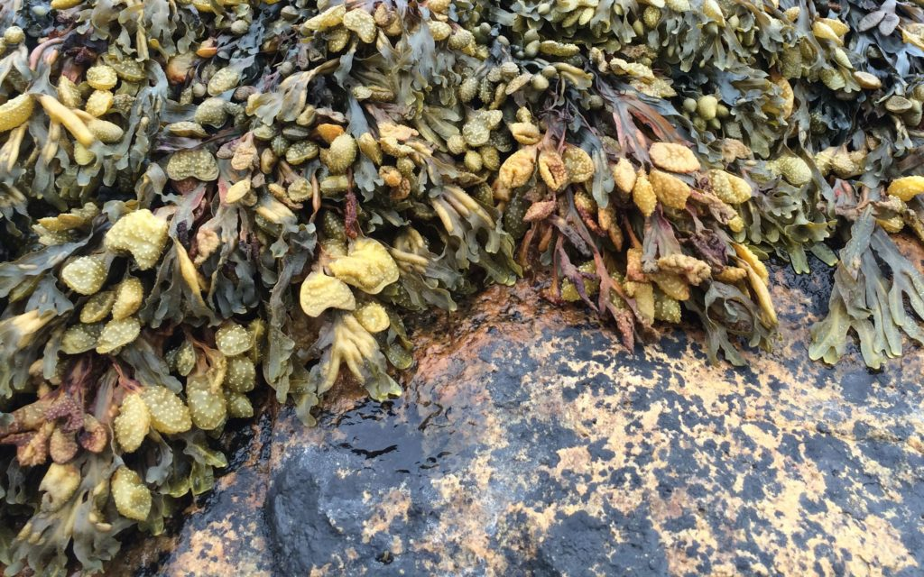 seaweed-and-rock