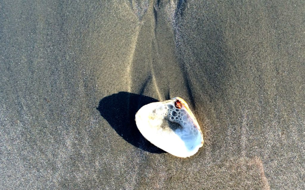 shell-on-sand