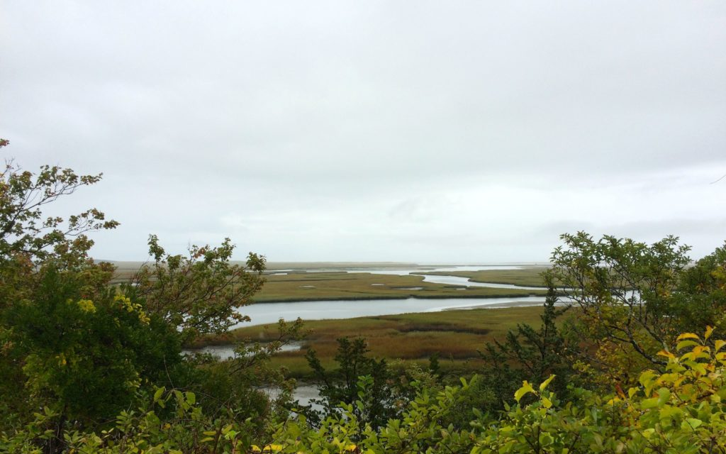 salt-marsh-view-from-indian-rock